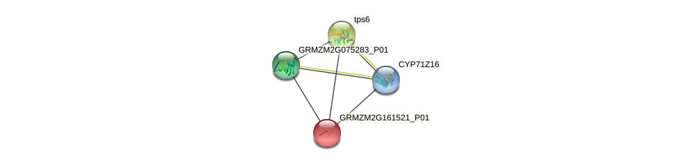 Zm.144355 protein (Zea mays) - STRING interaction network