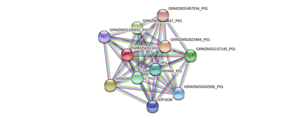 GRMZM2G161553_P01 protein (Zea mays) - STRING interaction network