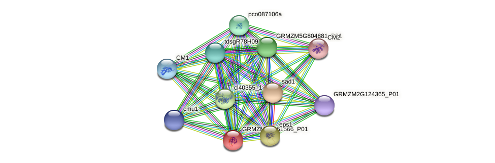GRMZM2G161566_P01 protein (Zea mays) - STRING interaction network