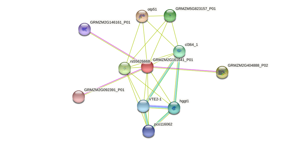 103627663 protein (Zea mays) - STRING interaction network