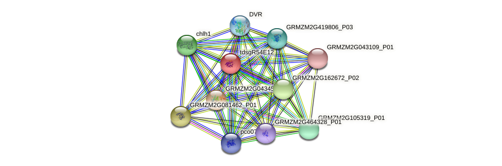 GRMZM2G161673_P01 protein (Zea mays) - STRING interaction network
