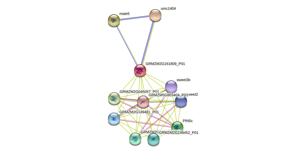 GRMZM2G161809_P01 protein (Zea mays) - STRING interaction network
