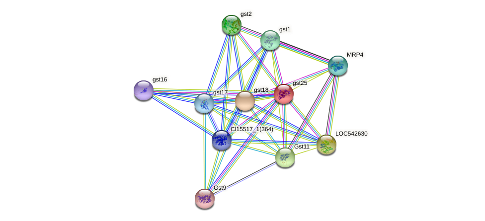 Zm.551 protein (Zea mays) - STRING interaction network