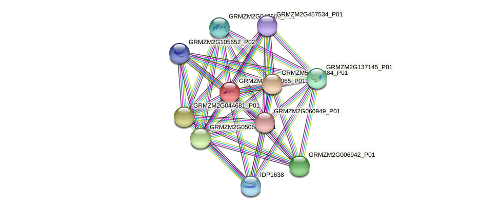 GRMZM2G162065_P01 protein (Zea mays) - STRING interaction network