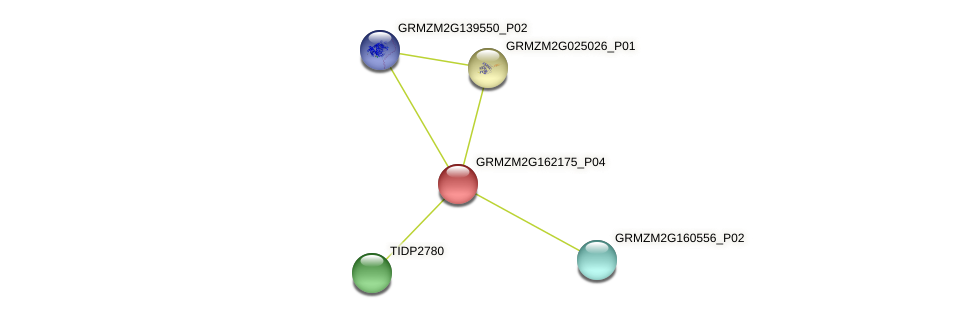 GRMZM2G162175_P02 protein (Zea mays) - STRING interaction network