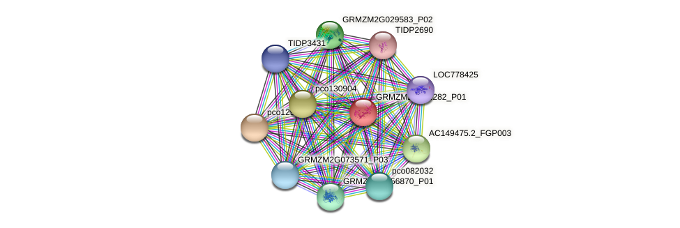 GRMZM2G162282_P01 protein (Zea mays) - STRING interaction network
