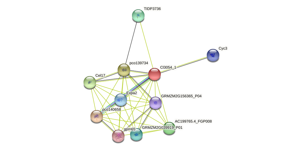 100216962 protein (Zea mays) - STRING interaction network