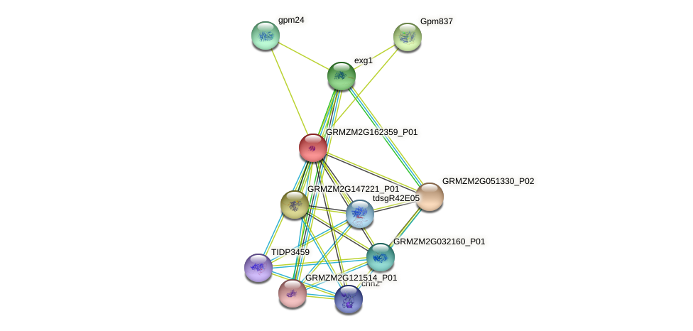 GRMZM2G162359_P01 protein (Zea mays) - STRING interaction network