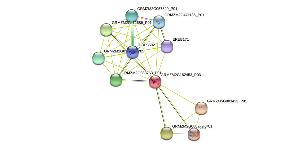 Zm.17228 protein (Zea mays) - STRING interaction network