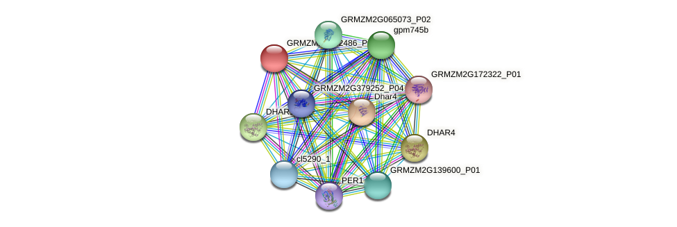 GRMZM2G162486_P01 protein (Zea mays) - STRING interaction network