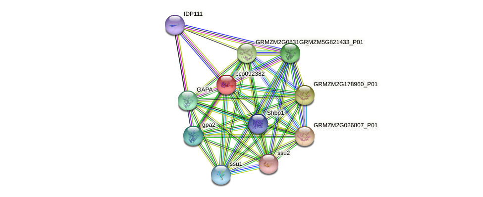 pco092382 protein (Zea mays) - STRING interaction network