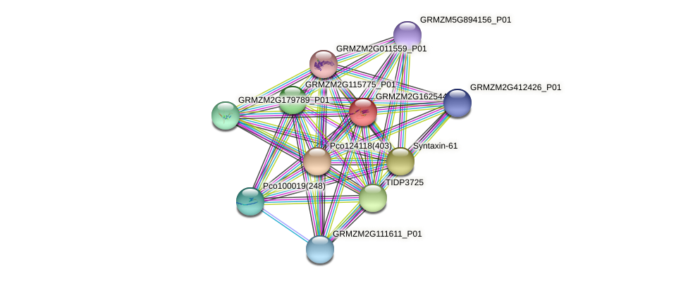 GRMZM2G162544_P01 protein (Zea mays) - STRING interaction network
