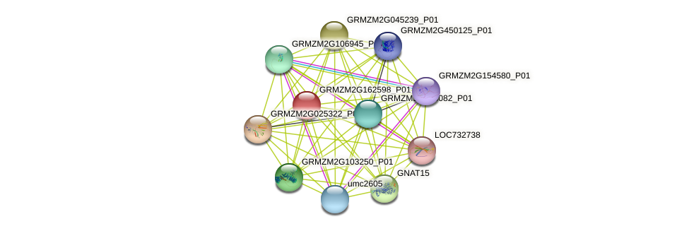 GRMZM2G162598_P01 protein (Zea mays) - STRING interaction network