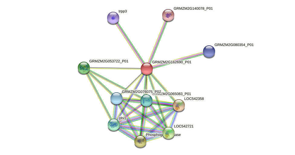 GRMZM2G162690_P01 protein (Zea mays) - STRING interaction network