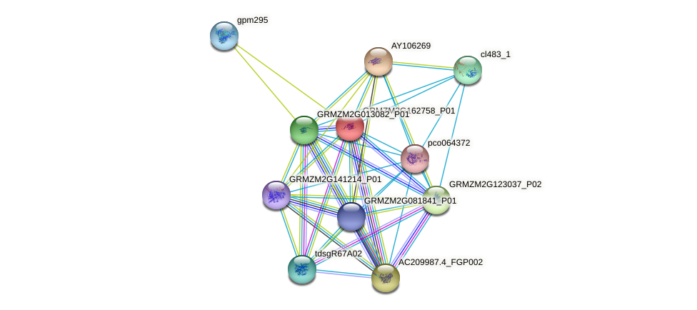 GRMZM2G162758_P01 protein (Zea mays) - STRING interaction network