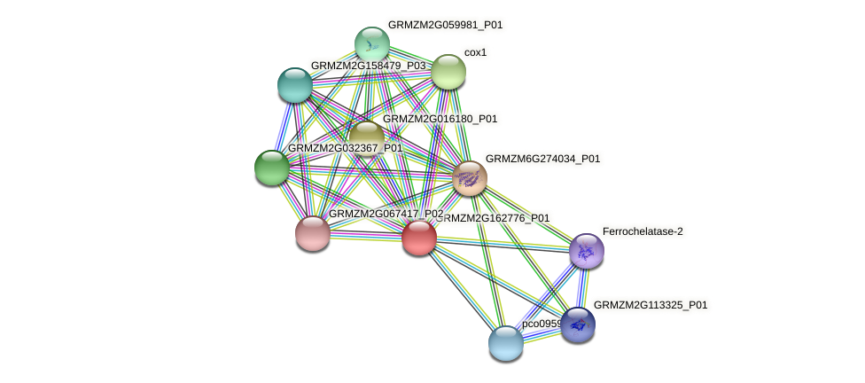 GRMZM2G162776_P01 protein (Zea mays) - STRING interaction network