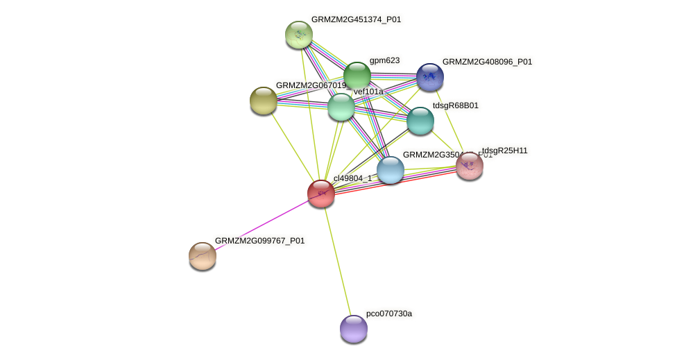 cl49804_1 protein (Zea mays) - STRING interaction network