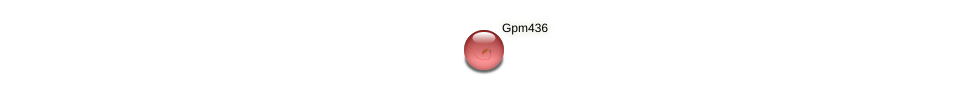 gpm436 protein (Zea mays) - STRING interaction network