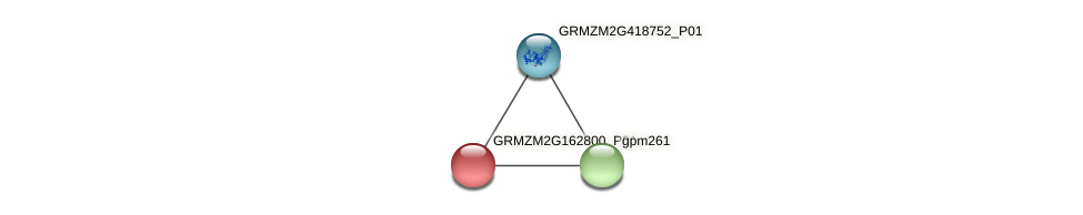 GRMZM2G162800_P01 protein (Zea mays) - STRING interaction network
