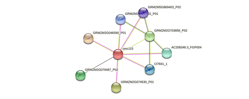 GRMZM2G162814_P01 protein (Zea mays) - STRING interaction network