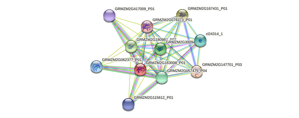 GRMZM2G163008_P01 protein (Zea mays) - STRING interaction network