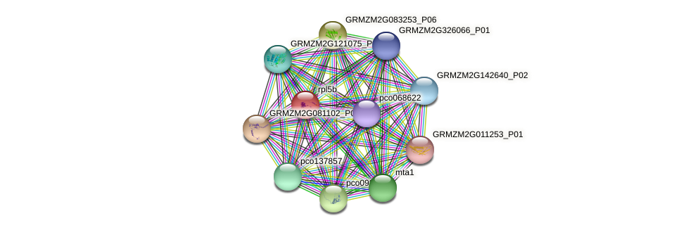 GRMZM2G163081_P01 protein (Zea mays) - STRING interaction network