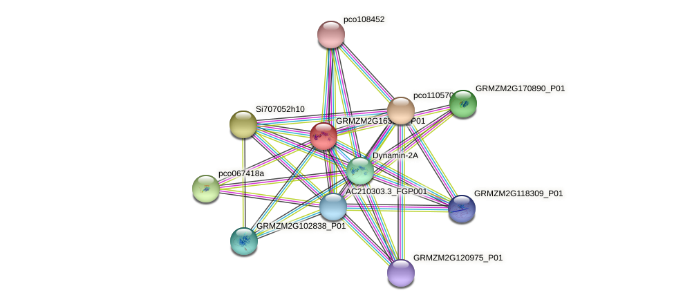 GRMZM2G163325_P01 protein (Zea mays) - STRING interaction network