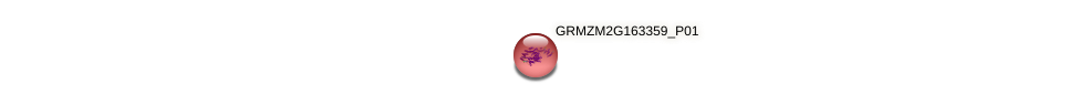GRMZM2G163359_P01 protein (Zea mays) - STRING interaction network