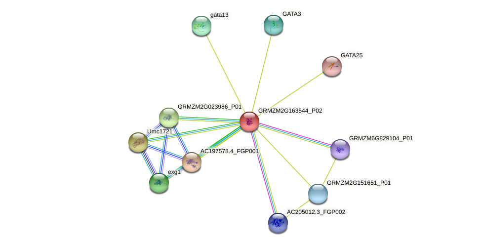 GRMZM2G163544_P02 protein (Zea mays) - STRING interaction network