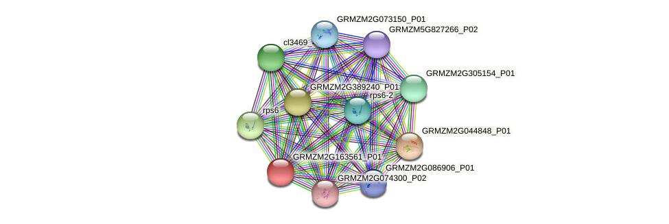 GRMZM2G163561_P01 protein (Zea mays) - STRING interaction network