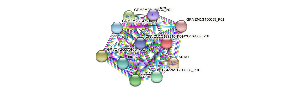 GRMZM2G163658_P01 protein (Zea mays) - STRING interaction network