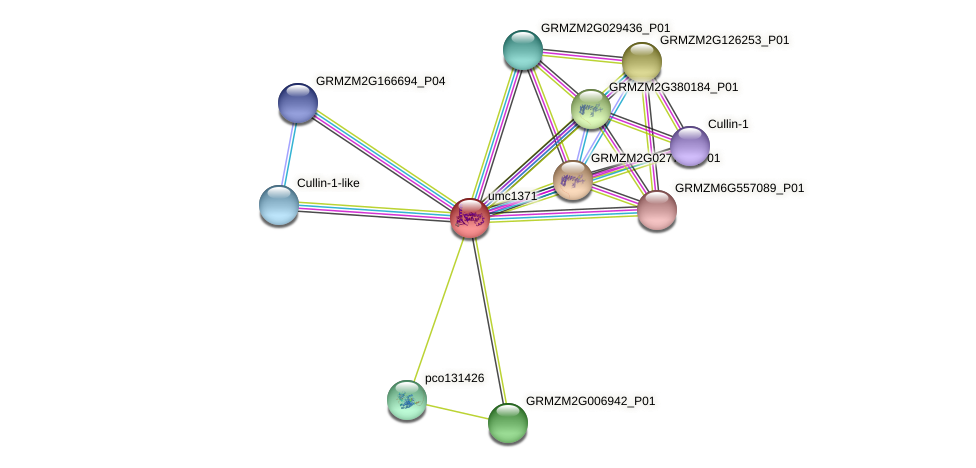 TRAF39 protein (Zea mays) - STRING interaction network