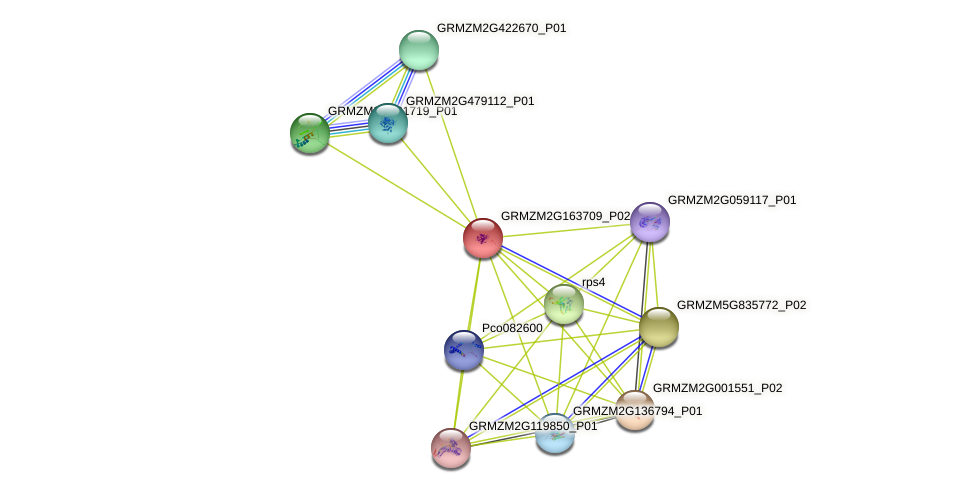 GRMZM2G163709_P02 protein (Zea mays) - STRING interaction network