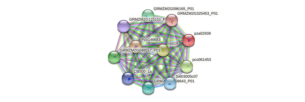 pza02939 protein (Zea mays) - STRING interaction network