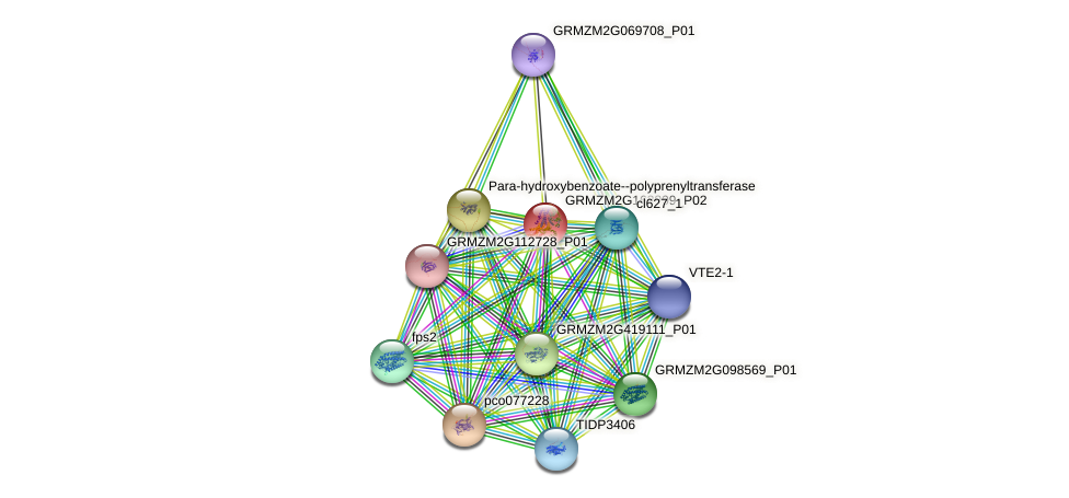 GRMZM2G163809_P02 protein (Zea mays) - STRING interaction network