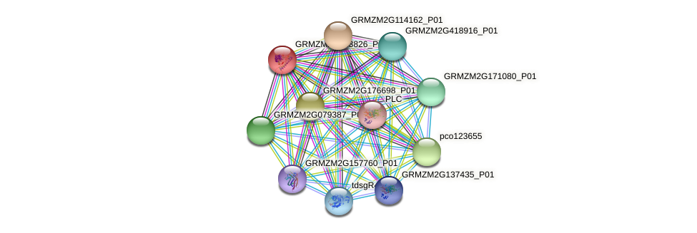 GRMZM2G163826_P01 protein (Zea mays) - STRING interaction network
