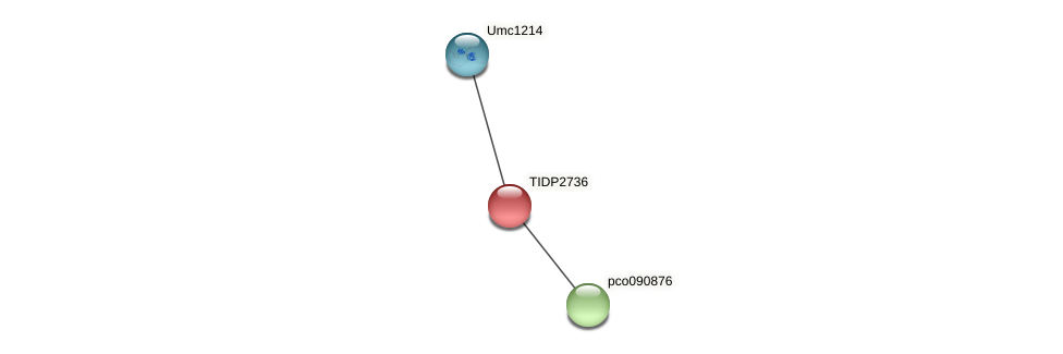 TIDP2736 protein (Zea mays) - STRING interaction network