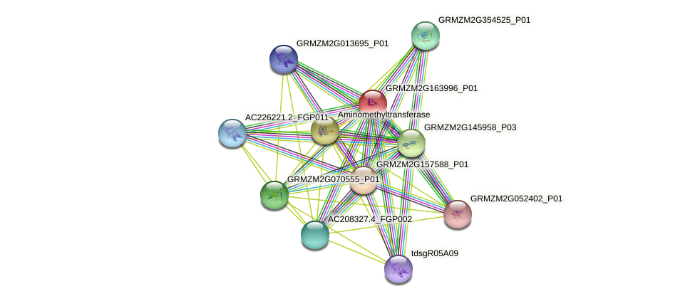 GRMZM2G163996_P01 protein (Zea mays) - STRING interaction network
