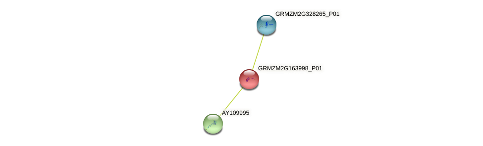 GRMZM2G163998_P01 protein (Zea mays) - STRING interaction network