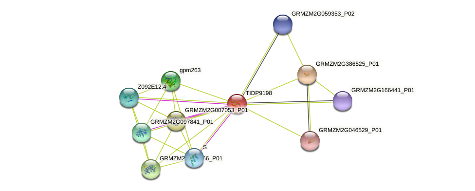TIDP9198 protein (Zea mays) - STRING interaction network
