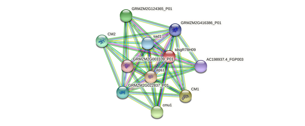 GRMZM2G164562_P01 protein (Zea mays) - STRING interaction network