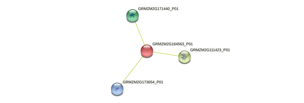 GRMZM2G164563_P01 protein (Zea mays) - STRING interaction network