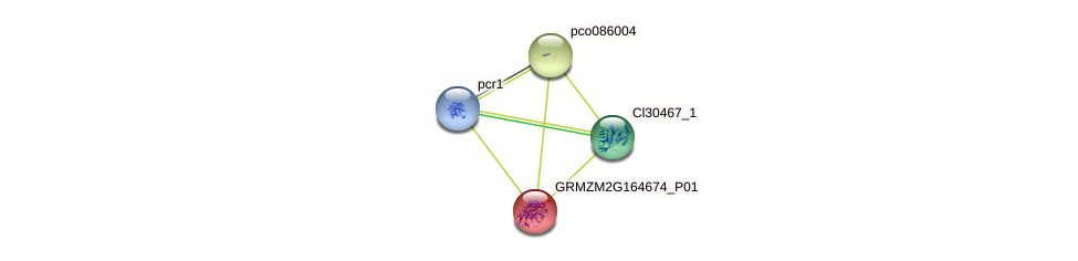 GRMZM2G164674_P01 protein (Zea mays) - STRING interaction network