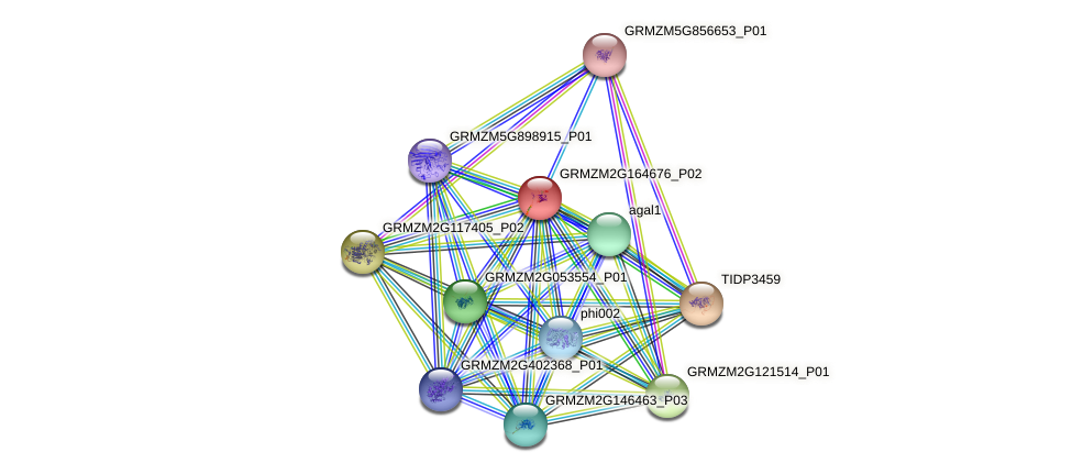GRMZM2G164676_P02 protein (Zea mays) - STRING interaction network