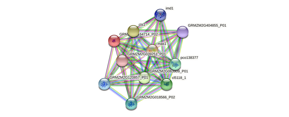 GRMZM2G164714_P02 protein (Zea mays) - STRING interaction network