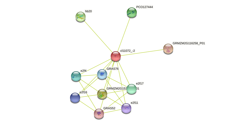 cl11072_-2 protein (Zea mays) - STRING interaction network