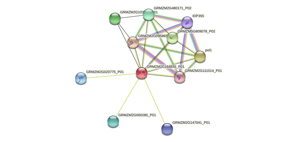 Zm.28180 protein (Zea mays) - STRING interaction network
