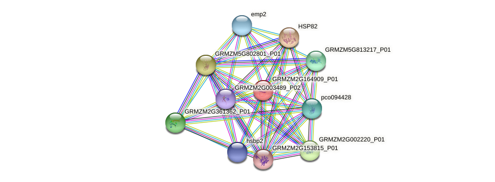 Zm.123378 protein (Zea mays) - STRING interaction network