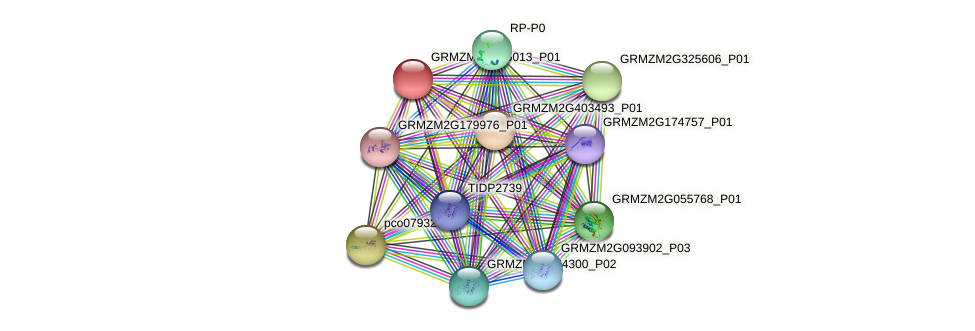 GRMZM2G165013_P01 protein (Zea mays) - STRING interaction network