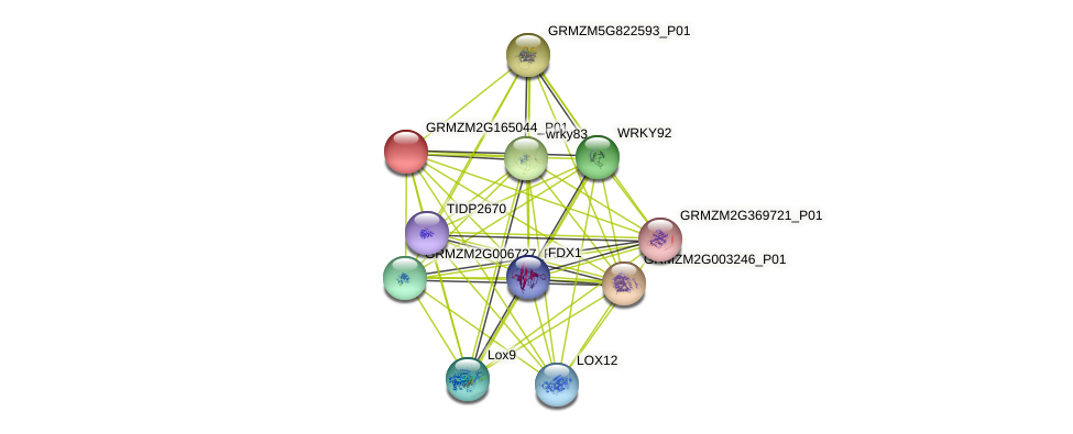 103649729 protein (Zea mays) - STRING interaction network